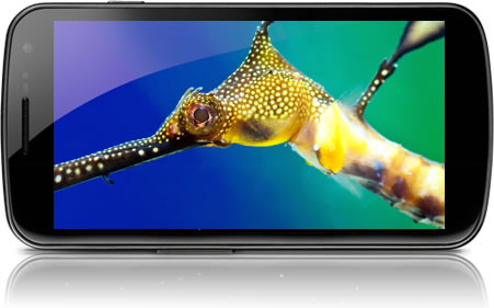 Samsung Galaxy Nexus Super AMOLED HD display