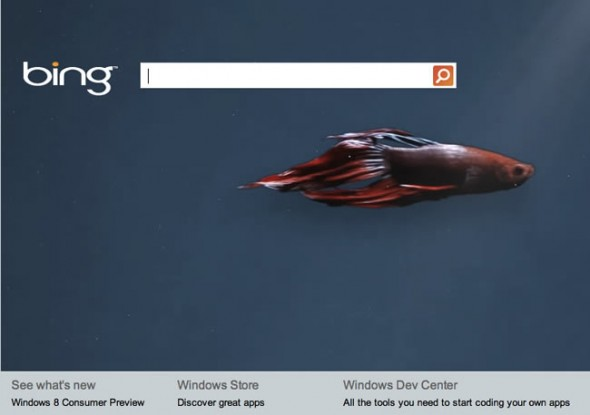 Bing page for Windows 8 Consumer Preview - betta fish