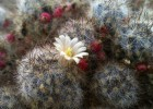 HTC One sample photo - cactus flower