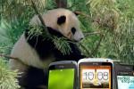 Sad panda HTC